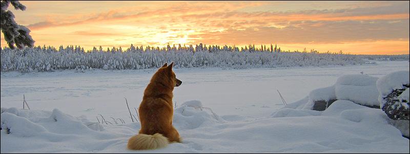 Kotirovan Taiga katselee Kihlangista Suomeen © Raimo Johansson